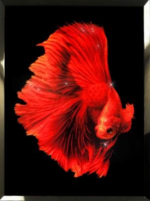 Картина с кристаллами Swarovski  Красная рыба